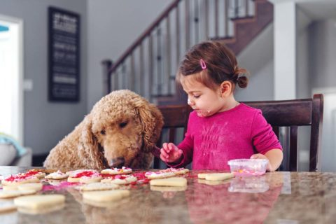 Valentine's Day Safety Tips for Pet Owners