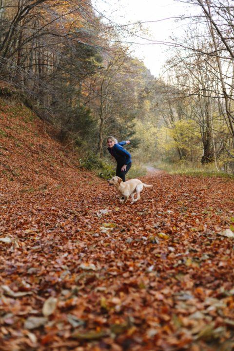 Dog Training Methods Affect Attachment to the Owner
